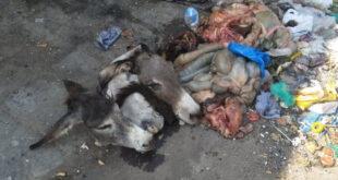 کراچی میں گدھے کا گوشت کس کو کھلایا جارہا تھا نیا انکشاف ہوگیا.......پڑھئے اس خبر میں