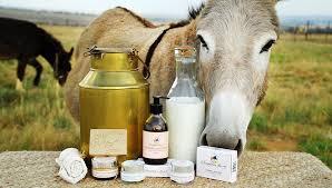 بھارت میں گدھی کے دودھ کی قیمت سُن کر آپ کے ہوش اُڑ جائیں گے
