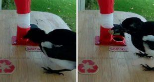 پرندوں کو بوتل کے ڈھکنے کے بدلے کھانا دینے والی مشین