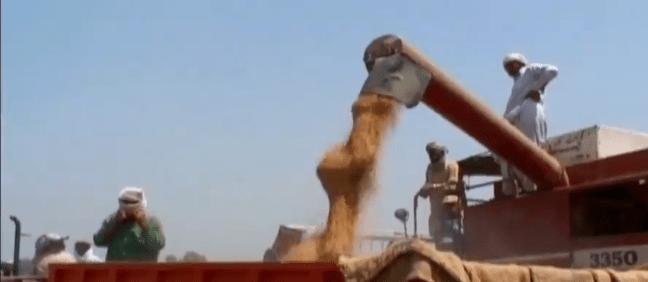 بیرون ملک سے منگوائی گئی گندم کی پہلی کھیپ پورٹ قاسم پہنچ گئی