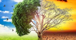 سال 2020 میں لاکھوں افراد موسمیاتی شدت کی باعث نقل مکانی پرمجبور،رپورٹ